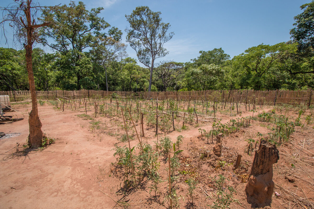 Environmental degradation is causing series of climate disorders, from drought to floods to soil erosion. This can have catastrophic consequences on people's livelihoods.